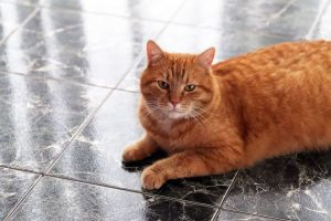 5 Simple Steps to Pet Proofing Your Grout and Tile
