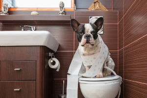 Two Ways to Keep Your Pets Safe During Grout Cleaning