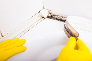 most common types mold and how to spot them